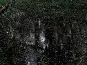 Cumbebin Swamp