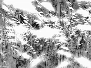 A Snowstorm of Birds